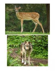 e82a93202979d5 Animal - PDF Free Download